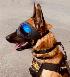 https://www.k9-k4.be/files/modules/products/1488/photos/product_goggles-mali.JPG